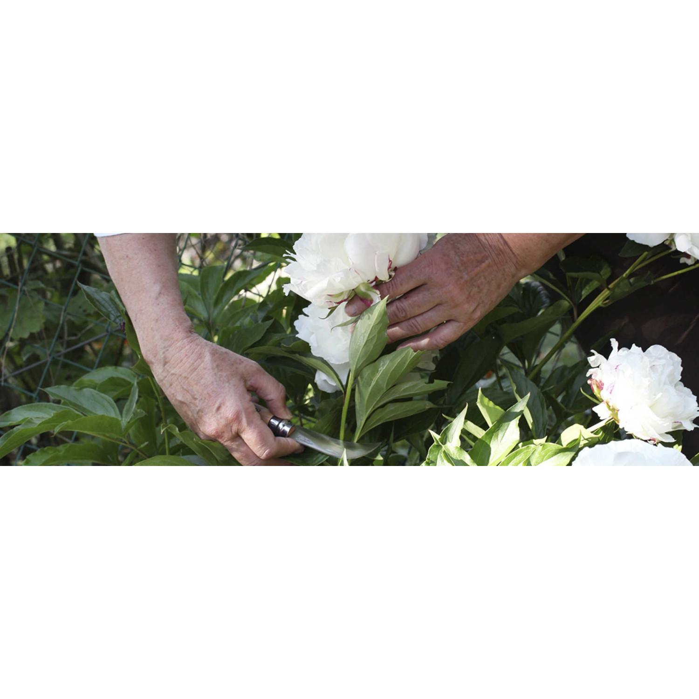 Фото 7 - Нож садовый складной Opinel №10 с изогнутым лезвием, нержавеющая сталь Sandvik 12С27, рукоять бук, 000657