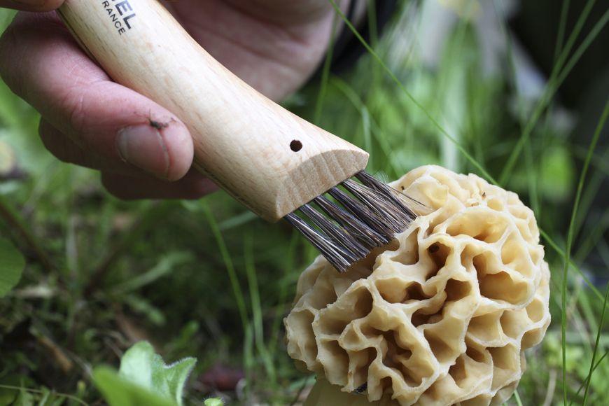 Фото 7 - Нож грибника складной Opinel №8, нержавеющая сталь Sandvik 12C27, рукоять бук, блистер, 001250